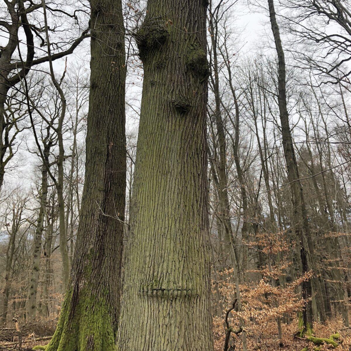 Walderlebnispfad Baumbart