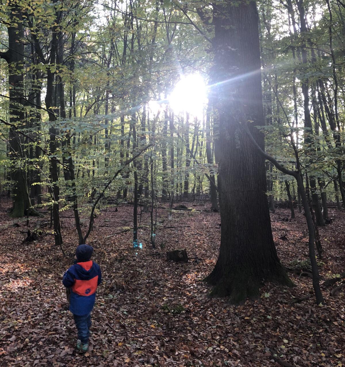 Walderlebnispfad Licht